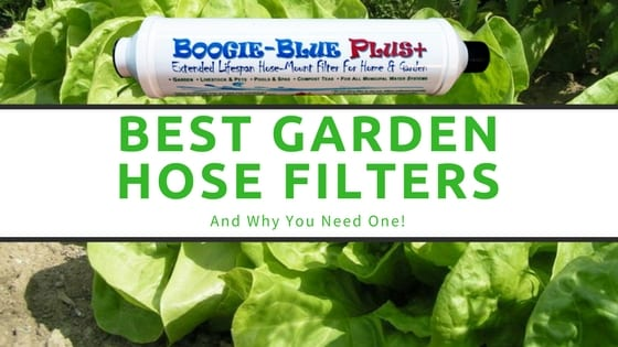 garden water filter and lettuce