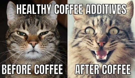 cat calm cat excited effect of coffee