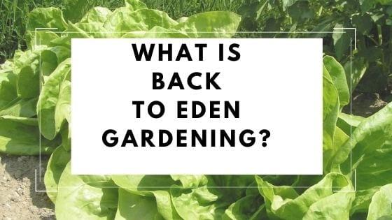 lettuce back to eden