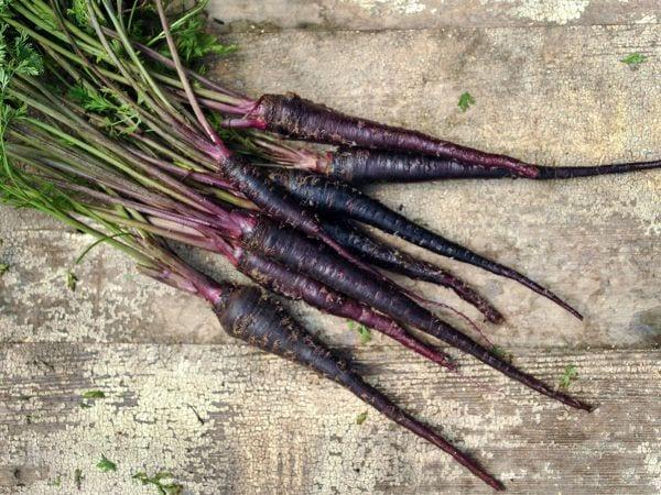 black nebula carrots