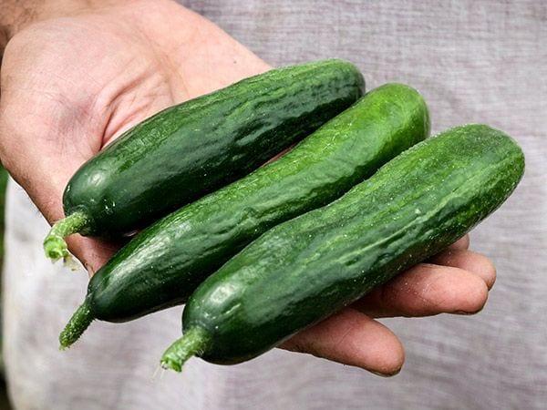 beit alpha cucumbers in hand